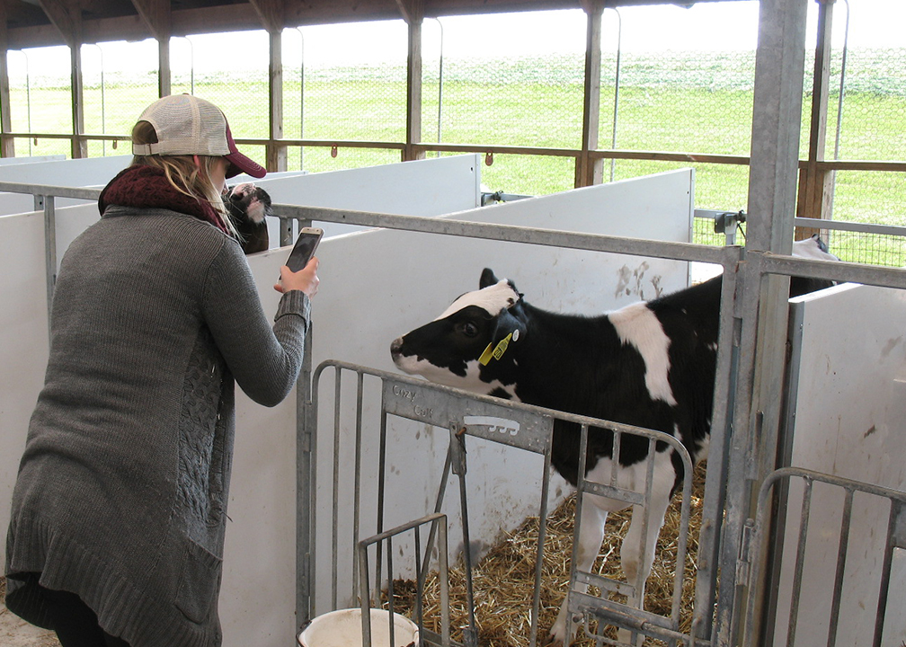 Fromagination Cheesemonger Shannon takes a calf's photo during the tour