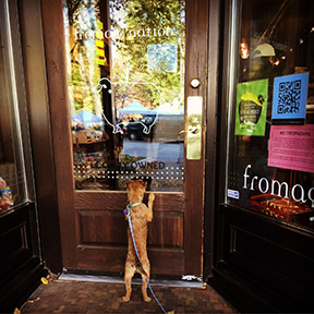 Fromagination's shop is interesting to everyone!