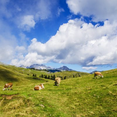 agriculture-alps-animal-552766