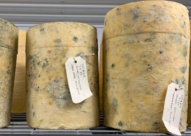 This is a picture of St. Isidore's Bandaged Cheddar cheese, featured at Fromagination